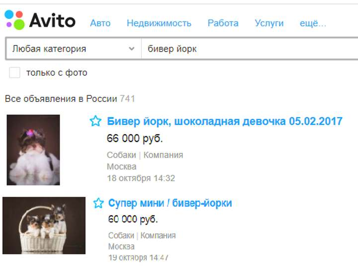 Авито: бивер йорк по РФ