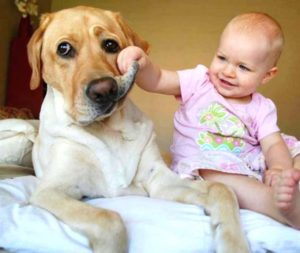 Малыш и лабрадор