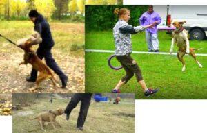 Как дрессировать собаку