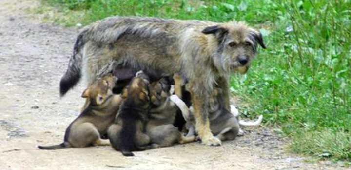 Выживание дворняги и щенков