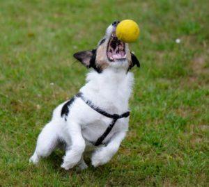 Веселый пес с мячом