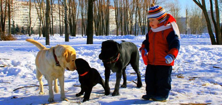 Керн среди больших собак