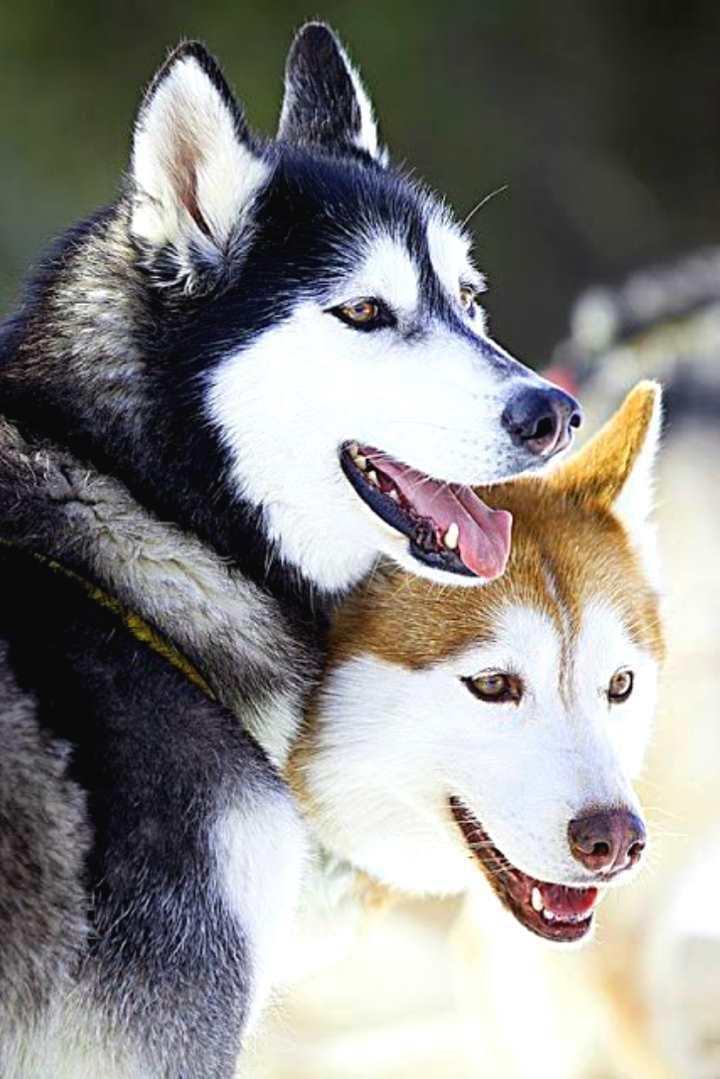 Два влюбленных кли кая