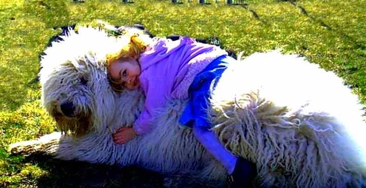 Девочка верхом на белой собаке