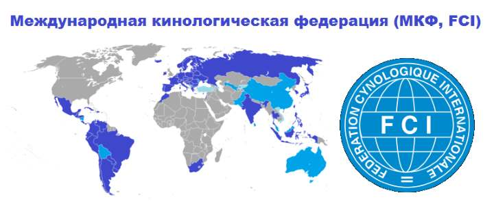 Международная кинологическая федерация