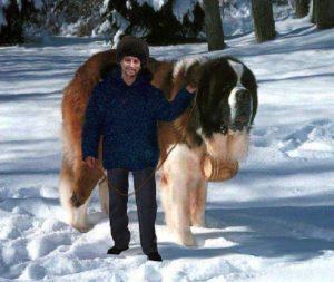 Собака с человека