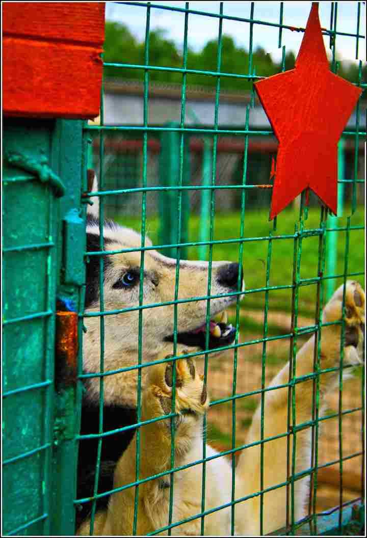 Собака в питомнике Красная звезда