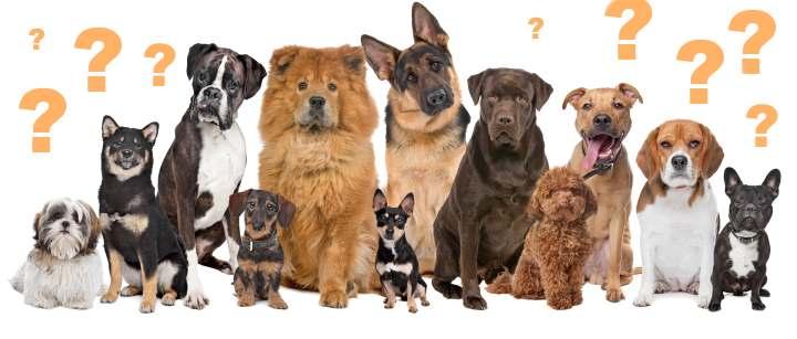 Собаки от малых до больших