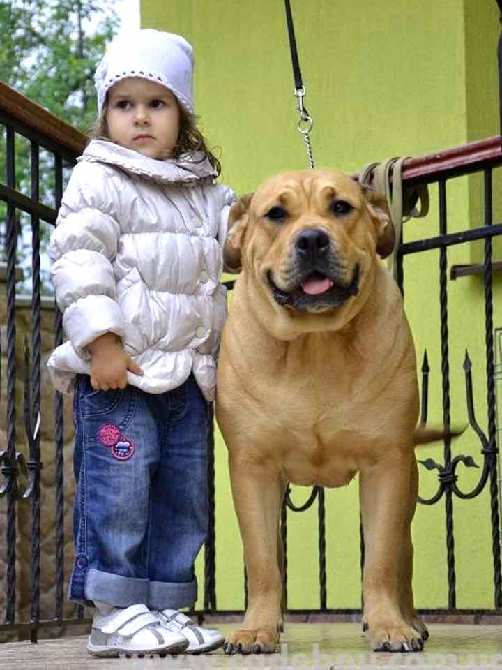 Девочка в белой куртке и рыжая собака