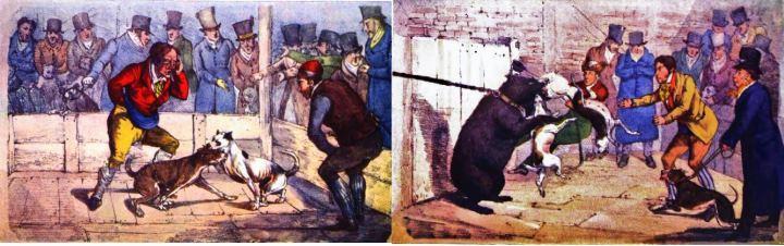 Картина с изображением собачьих боев