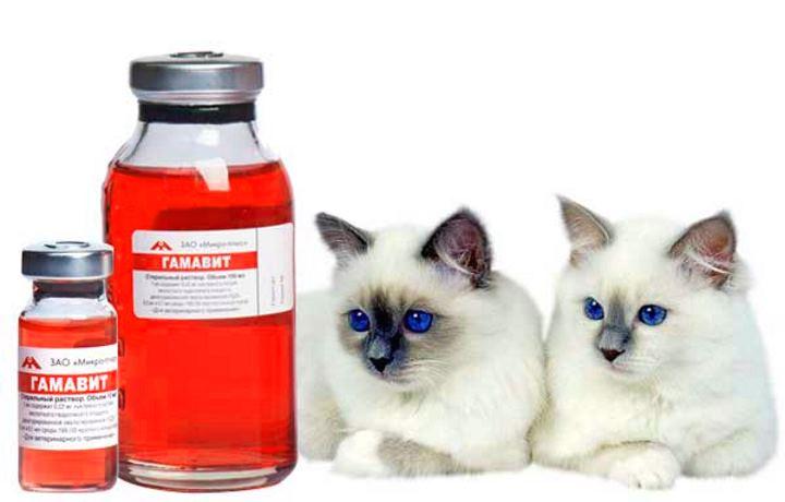 Сиамские кошки и гамавит