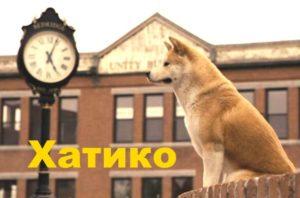 Кадр из фильма Хатико