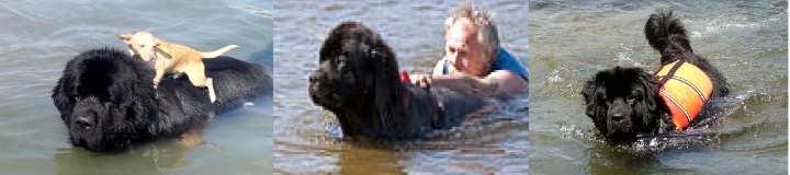 Шерсть собаки спасателя