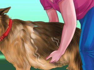 Выявление беременности пальпацией
