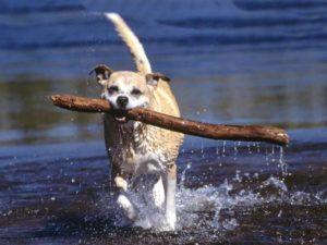 Физнагрузки для собак