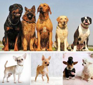 Собаки от мелких до крупных