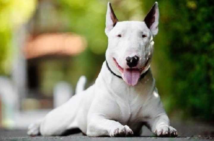 Собака среднего размера, вес до 15 кг