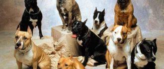 Много собак