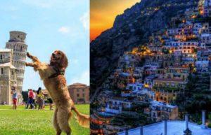 Итальянские породы собак стары, как сама Европа