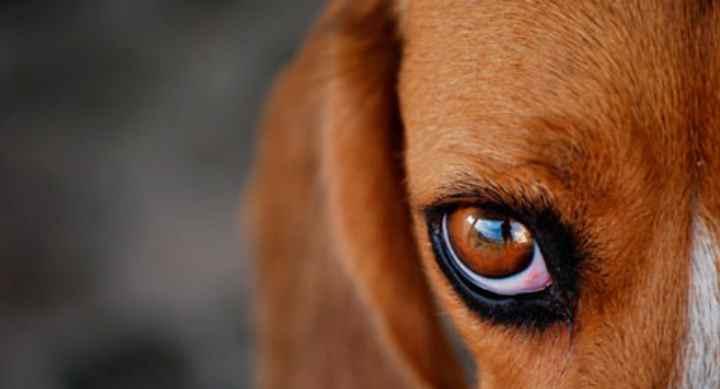 Воспаление глазной роговицы из-за инфекций и повреждений