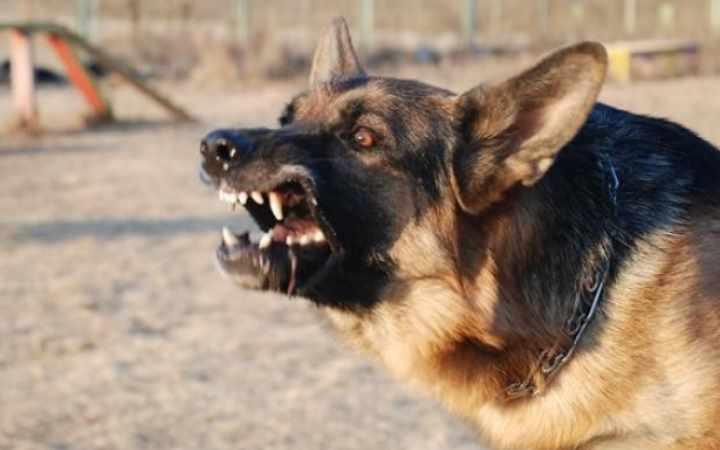 Эти прекрасные, умные и верные служебные собаки