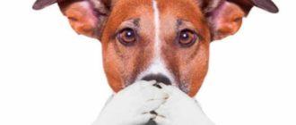 Собачки не гавчут из вредности