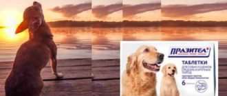 При лечении щенков удобнее использовать суспензию