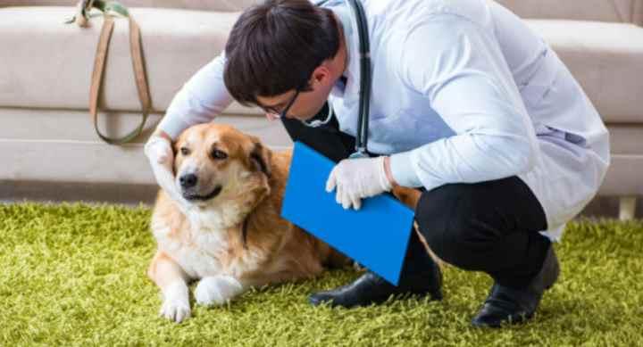 Признаки простатита у собак: Диагностирование и лечение- Профилактика болезни Видео