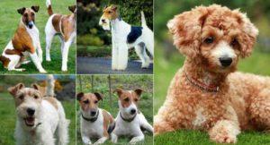 Средние породы собак являются самыми популярными в мире