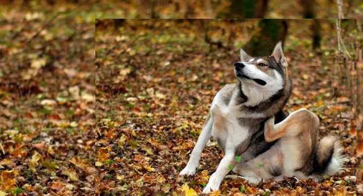 Суспензию дают собакам один раз в день утром