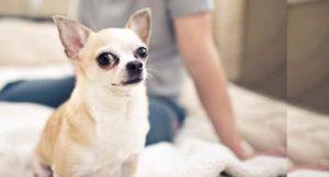 Это распространённая проблема, ведь кинологи выводят такое невероятное количество разных собак, что глаза разбегаются