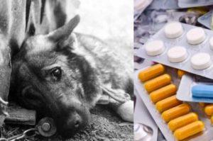 Токсичные вещества, применяемые догхантерами для истребления псов