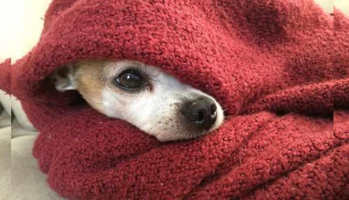 проблемы с дыханием: собака пытается помочь себе