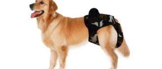 Эстреус у собак крупных пород