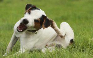 Владельцы собак знают поведение своего питомца