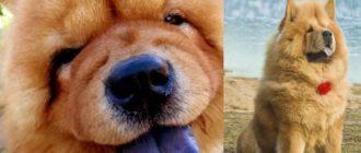 отобранные у собак материалы ДНК для анализирования, тому подтверждение