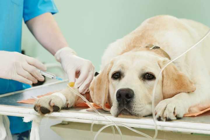 Собачки-падальщики – обращают внимание на неблагоприятные предметы