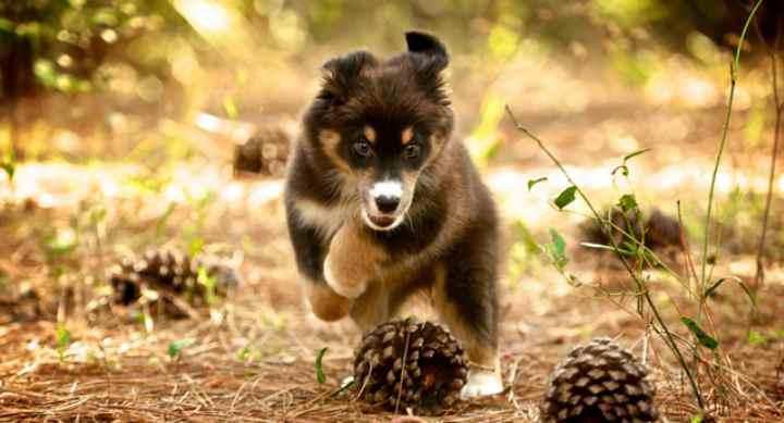 Идет интоксикация в организме пса