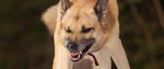Поговорим о бешенстве у собак