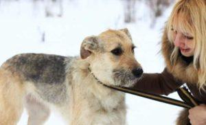 Любая болезнь для собаки может оказаться очень опасной