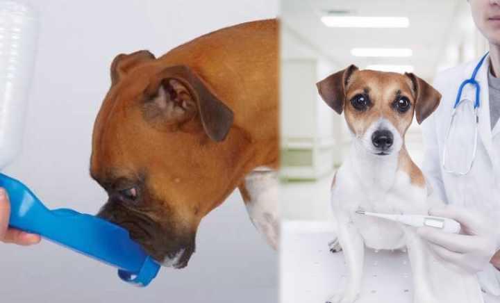 Опасный и беспощадный по отношению к собакам вид инфекции
