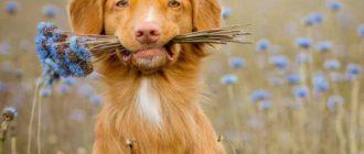 Фоспасим показан собакам