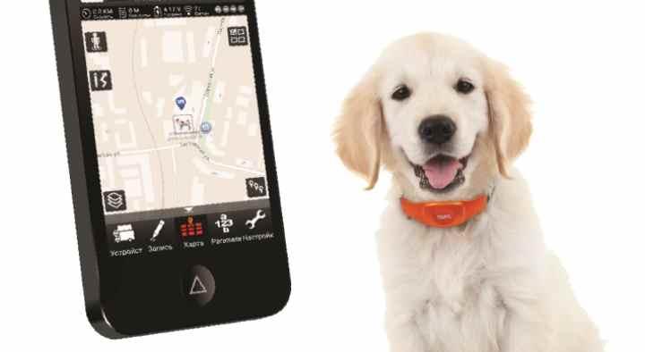 Критерии выбора GPS-ошейника для собак