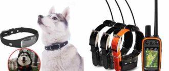 Принцип работы GPS-ошейника для собак