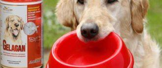 Собаки часто подвержены различным нарушениям суставов