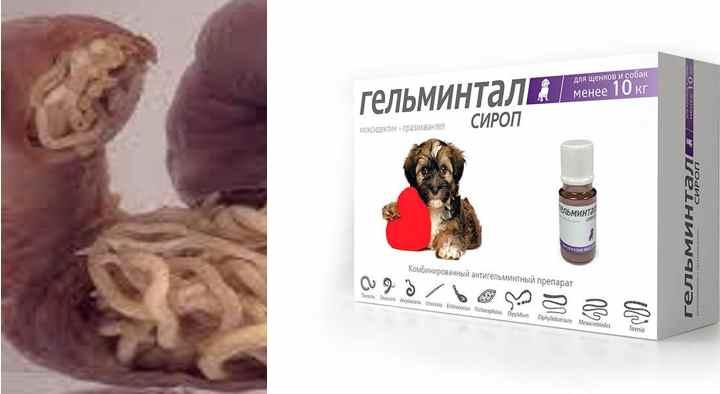 Капли на холку классифицируются на следующие категории: для собак до 4 кг (0,4мл), от 4 до 10 кг (1мл), от 10 до 25 кг (2,5 мл), массой более 25 кг (4 мл)