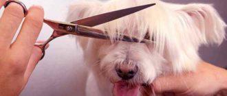 Груминг собак состоит из двух видов процедур