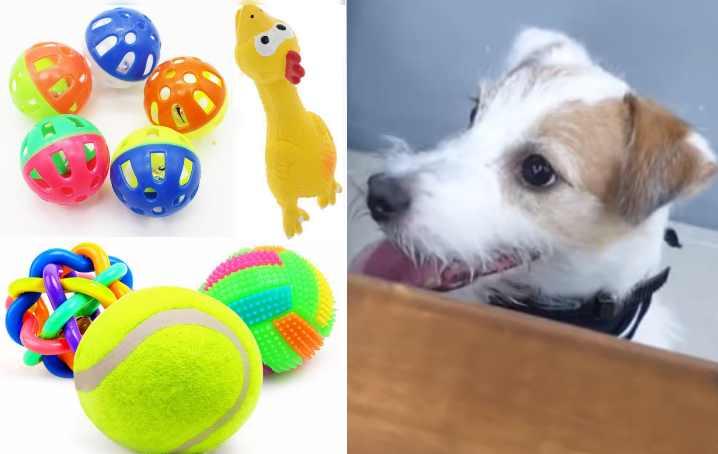 Игра - щенкам необходимо развлекаться