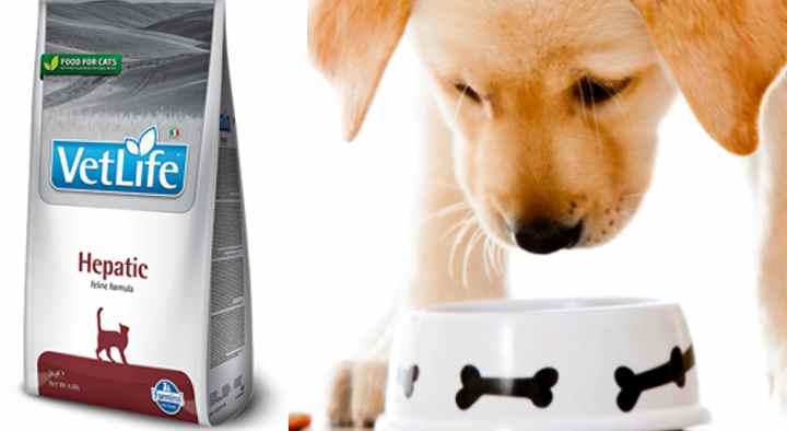 Как кормить собаку с больной печенью