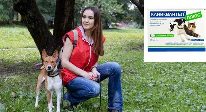 Почему глисты так опасны для собаки?